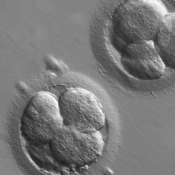 Read more at: IVF Cultures and Histories
