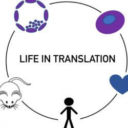 Read more at: Life in Translation